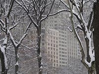 New York, Central Park - photographic inspiration