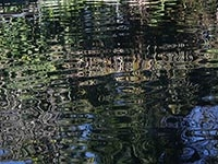 Sydney Botanical Gardens Reflections - photographic inspiration