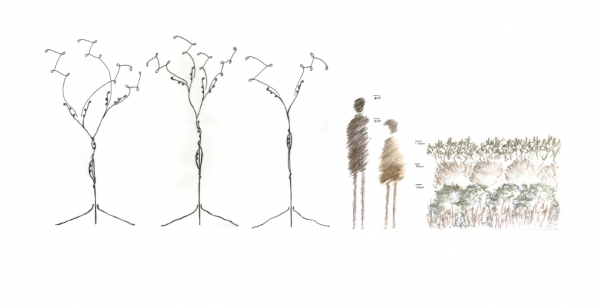 scale drawing of trees